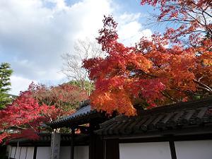 南禅寺塔頭の天授庵の紅葉。南禅寺ももちろん紅葉が美しい。