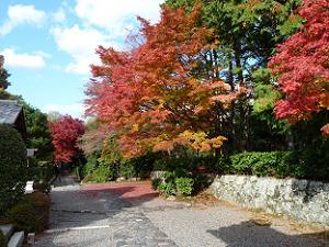 嵐山の名所・天龍寺境内の紅葉。