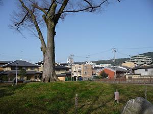 方広寺大仏殿があった場所。現在では緑地となっています。