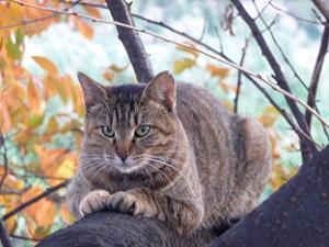 桜の木にとまる猫