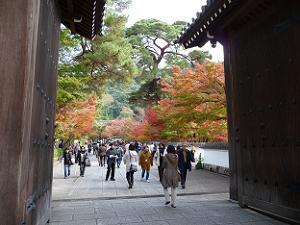 門の先には、赤色や黄色に染まった木々が目に飛び込んできます。