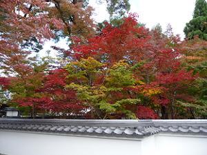 拝観料を納める前でも紅葉を楽しめます。