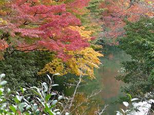 夢庵から見た放生池と紅葉