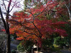 石清水八幡宮の駐車場の入口の紅葉