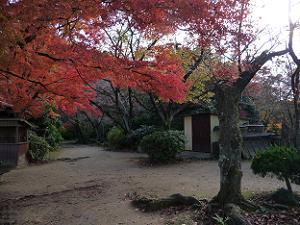 展望台の紅葉