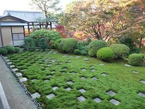 ウマスギゴケの生えた北庭