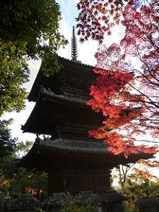 三重塔を背景に夕日で輝く紅葉