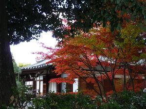 西雲院の鮮やかな紅葉