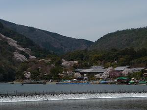 渡月橋から見た嵐山の桜