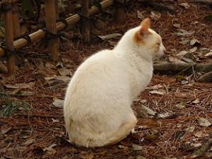 近衛邸跡に住む猫