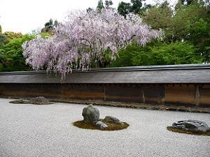庭の塀を越える桜の枝