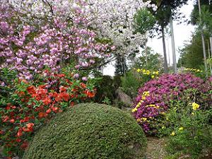 黄、紫、赤、桃、白と5色の花が勢ぞろい