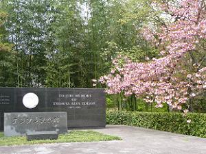 エジソン記念碑の八重桜
