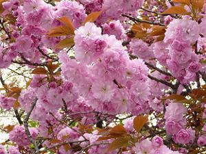 濃い色の花弁