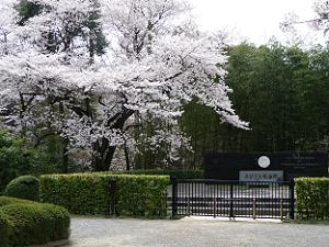 エジソン記念碑と満開の枝垂れ桜
