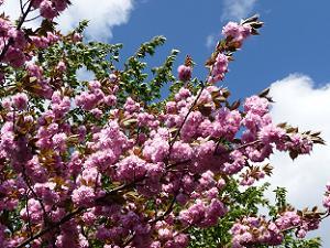 ボリューム満点の濃い花