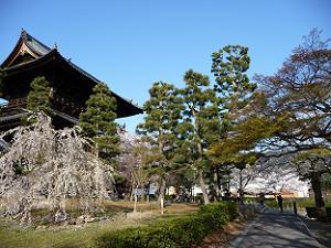 三門と枝垂れ桜