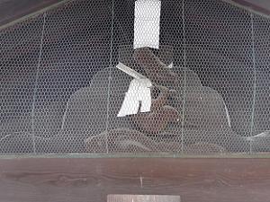 金網で閉じ込められた猿