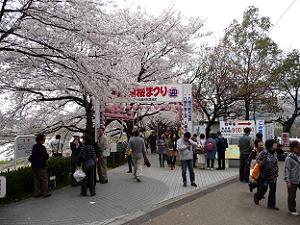 桜のトンネルへの入り口