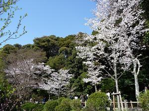 青空と山と桜