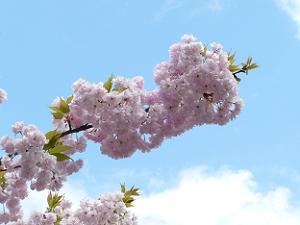 枝にびっしりとついた淡い色の花
