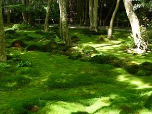 帰る前にもう1枚苔のじゅうたんを撮影