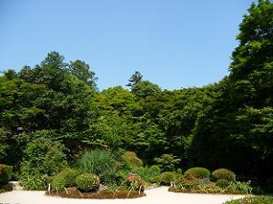 青空と庭園