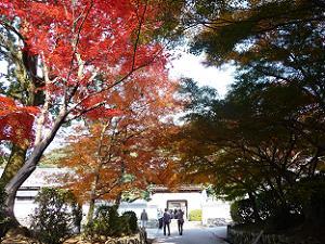 興聖寺の琴坂