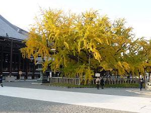 西本願寺の黄葉