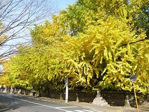 龍翔寺の黄葉