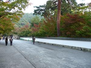 塀を越える紅葉