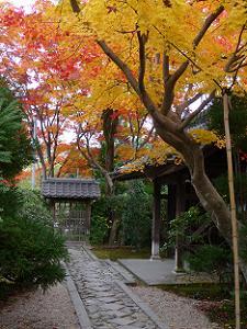 門をくぐると鮮やかな紅葉