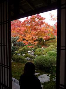 窓越しに見た庭園