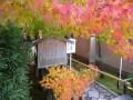 光悦寺の紅葉2010年