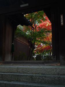 門越しの紅葉