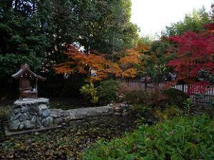 池を囲む紅葉