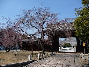 妙覚寺の門前