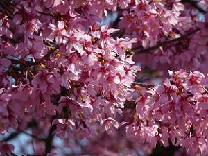 密集した花弁