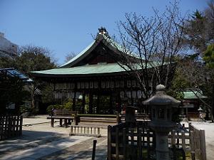 白峯神宮の左近の桜