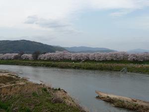 三川合流地点の背割堤