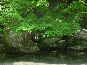 池周辺の新緑