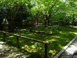 本堂付近の新緑と苔