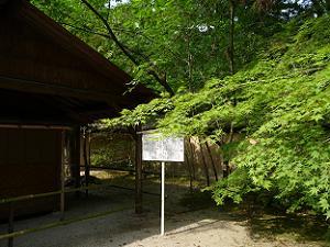 河合神社のカエデ