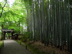 再び竹の道を通って境内の外へ