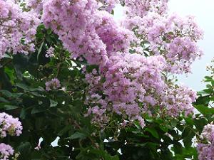 薄いピンク色の花