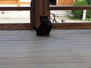 割拝殿のネコ