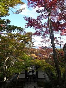 石段からの紅葉の眺め