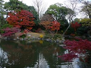 九条池の紅葉