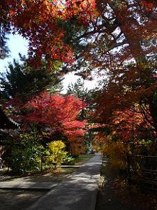 太陽に照らされた参道の紅葉