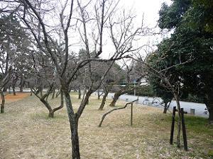 枝だけの白梅